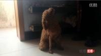 [拍客]:狗狗犯错自虐罚跪