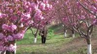 旅顺二零三樱花园