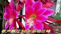 飞得更高(侯磊)百首金曲-令箭荷花2016-GJC摄影
