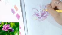 彩铅自学基础快速入门——彩铅木槿花