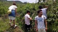 TSH视频田 织金洞大峡谷桃园风趣8