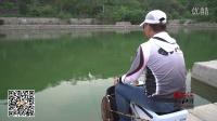 混养练竿塘--江湖鲤4H 实战演示