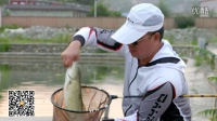 混养练竿塘--江湖鲤3-8H 精彩上鱼瞬间 拍摄花絮