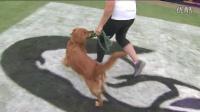 人犬敏捷运动1