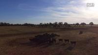 """""""全民养牛""""项目澳洲牧场航拍视频系列 1"""