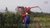 新疆牧神4YZB-3A玉米收获机作业视频