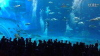"""【冲绳之行】美之海水族馆--""""黑潮之海"""""""