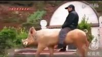 方言配音搞笑视频 麻城话配音搞笑视频 麻城方言搞笑视频骑猪去配种