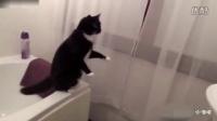 猫星人遇到镜子中的自己,彻底懵逼了