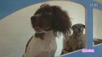 英国首个狗狗艺术展 参观的汪星人愉快玩耍