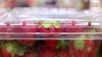 小确悲创意广告《草莓的一生》