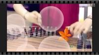 魅力古筝演奏5