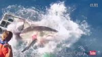 大白鲨撞进笼子里攻击潜水员,結果...(中文字幕)