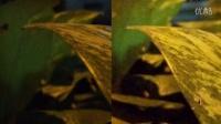 Google Pixel XL vs 一加 3 相機對比評測,效果令人驚訝!@成近田