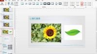 PPT课件设计与制作之图片处理