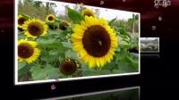 上海植物园————皖俞随拍