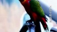 不数年轮微视 鹦鹉不但会说话 还会跳舞 接电话 奇了