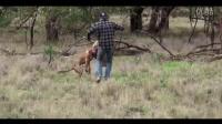 小伙为了救狗,一拳把袋鼠干懵逼了