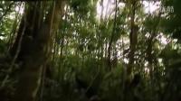 【荒野求生】哥斯达黎加雨林
