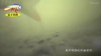 这样的小沟一把酒米却诱来大量鲫鱼(水下拍摄)
