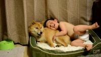 小朋友特别爱家里的柴犬,抱着它在狗窝躺着