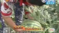 济南:西瓜滞销,因个头太大