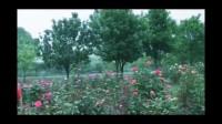 桂 & 姐妹们の辰山植物园