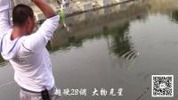 《草根江湖》钓鱼技巧之夏日黑坑垂钓实战视频