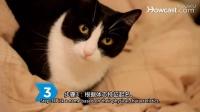 如何给猫取名_ #宠物护理#养猫小知识_视频翻译