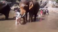 大象撞飞女子