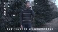 紫光唱豫剧·卖苗郎-牛恋老槽马恋圈