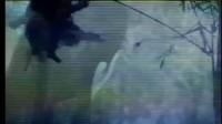 新碧血剑(完整无删剪版)