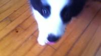 yoyo训练视频