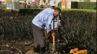 济南 泉城广场起火绿化树木被毁 民生直通车 0430