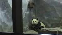 """爆笑熊猫版""""越狱"""""""