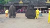 FILE0441--西双版纳看大象