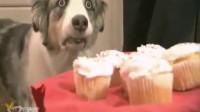 吃蛋糕你想什么呢 眼神笑S了