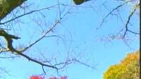 葫芦丝独奏《竹林深处》