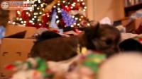 圣诞节小萌狗集体出动