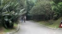 2014成都锦里、南郊公园、天府大道夜景