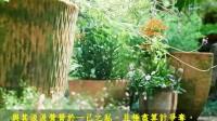 【 溪雨微微洗客尘】书香音乐系列10-4