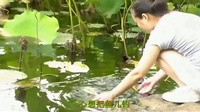 TSH视频田-贵州经典山歌-要把小妹逗上勾