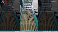 沧州泰信选果设备梅子分级机- 安徽地区乌梅客户上门考察实验现场演示视频(无删减)