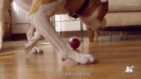 养宠物的盆友看过来!一只球竟能终结爱宠孤单