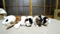 20170501 ごろごろする6匹の猫 Six cats 2017#2