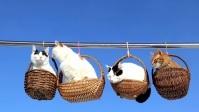 20170517 かご猫 x 吊りかご猫 basket