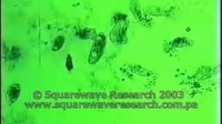 Rife Machine Killing Bacteria