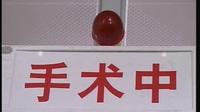 肥猫寻亲记(第30集)『大结局』国语【郑则仕 陈莹 斯琴高娃 李可妮 郝蕾 鲍起静 蒋恺】