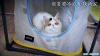 加菲猫 不点儿 找新家 视频VLOG