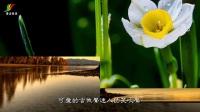 俞隆华 - 感谢你的鼓励  闽南语